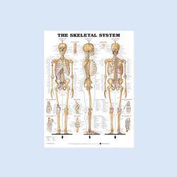 Wandplaat 'The Skeletal System', formaat 157 x 107 cm
