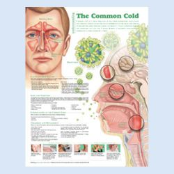 Wandplaat 'Understanding the Common Cold'