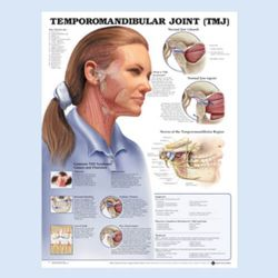 Wandplaat 'Temporomandibular Joint'