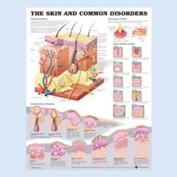 Wandplaat 'The Skin and common disorders'