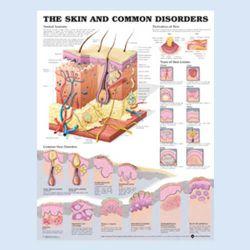Wandplaat 'The Skin and common disorders'