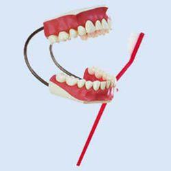 Poetsgebit met tandenborstel, 3x vergroot
