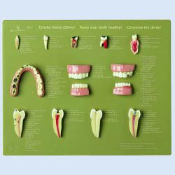 Demo-kast 'Keep your teeth healthy' (En/Du/Fr), 12 modellen