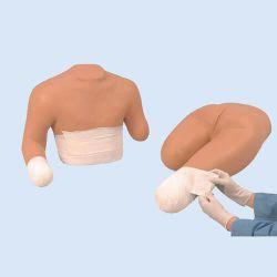 Stompverbandmodel van boven- en onderlichaam (1 elk)
