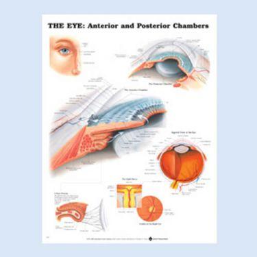 Wandplaat 'The Eye: Anterior & Posterior Chambers'