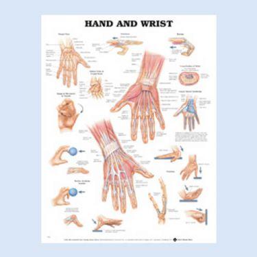 Wandplaat 'Hand & Wrist'