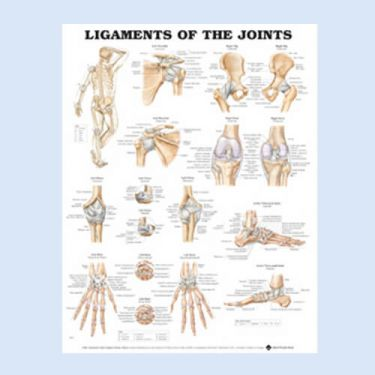 Wandplaat 'Ligaments of the Joints'