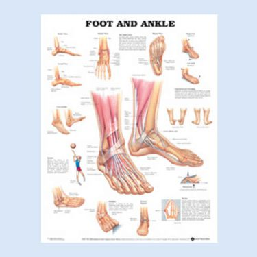 Wandplaat 'Foot & Ankle'