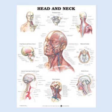 Wandplaat 'Head & Neck'