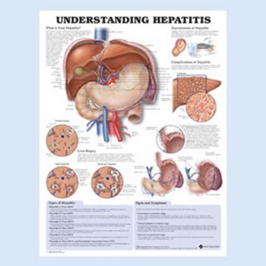 Wandplaat 'Understanding Hepatitis'