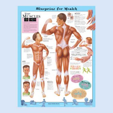 Wandplaat 'Your Muscles'