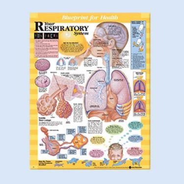 Wandplaat 'Your Respiratory System'