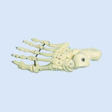 Voetskelet, elastisch gemonteerd, zonder onderbeenstompen
